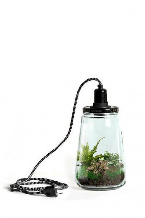 Atmos het kleinste My Little Planet plantenterrarium voor in huis